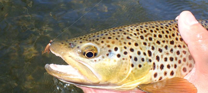 Fly Fishing April: Grannom Caddis Hatch