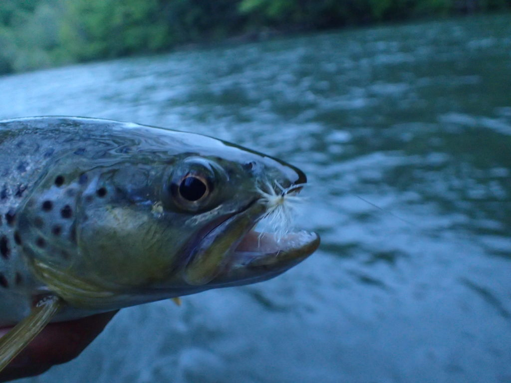 Dry Fly Fishing: A Couple Tips for the Little J