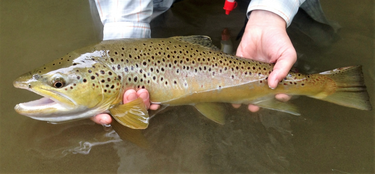 Fly Fishing March: A Favorite Month to Start the Season
