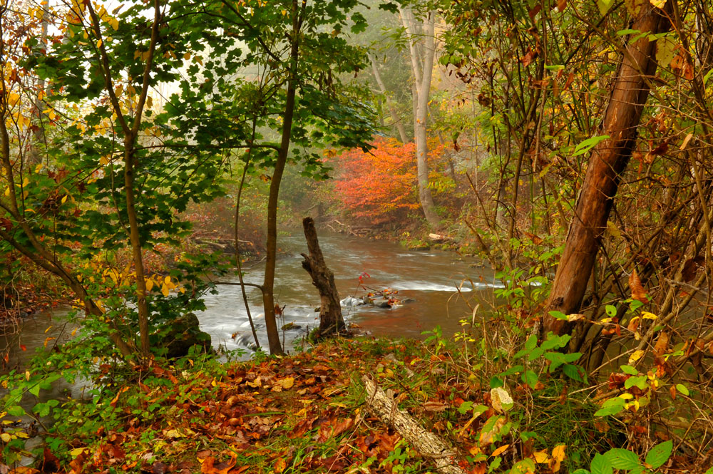 Photo of Spruce Creek in the Fall