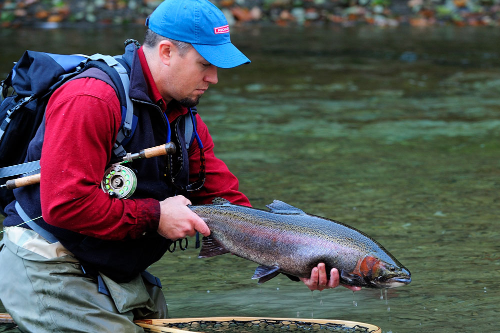 Steelhead Photo