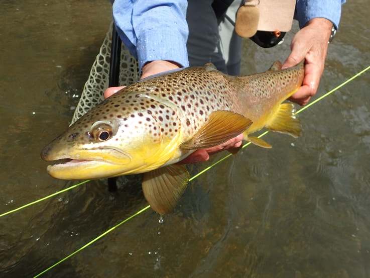 Consistent Rain, Extra Water, and How it Affects the Trout Fishing