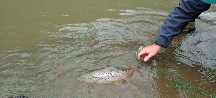 Fly Fishing High, Dirty Water: Attractor Flies