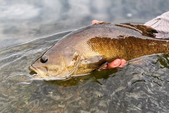 HomeWaters Fly Fishing: Catching Summer Smallmouth on Poppers