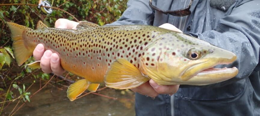 Fly Fishing Tips: Honing Hooks