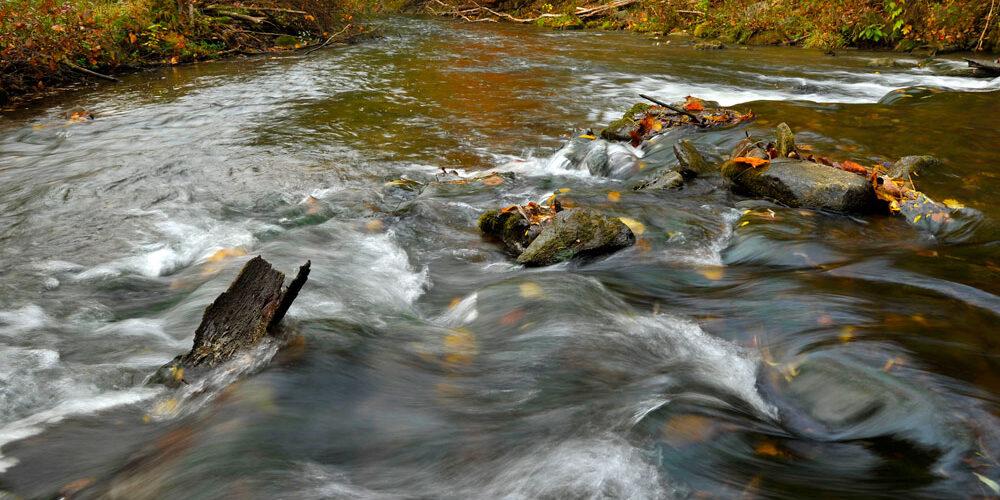 Spruce Creek Photo